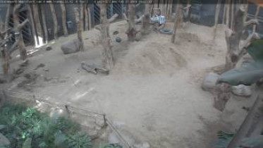 Preview webcam image Amersfoort- ZOO