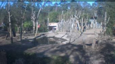 Preview webcam image Amersfoort - ZOO 2