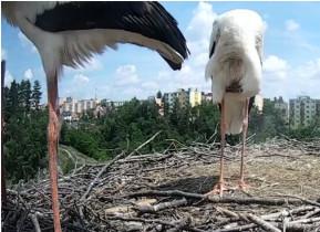 Preview webcam image Tebic - storks