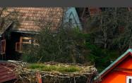 Preview webcam image Pribylina - storks